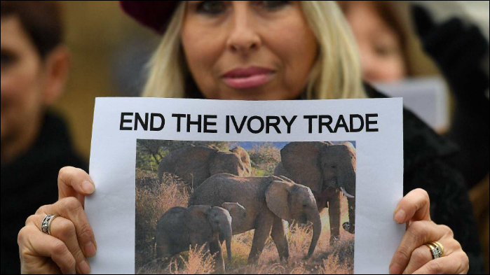 'Following on the heels of China,' new law closes ivory trade in UK