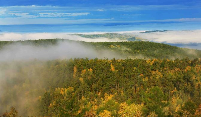 Chinese forestry companies help remote areas reduce poverty