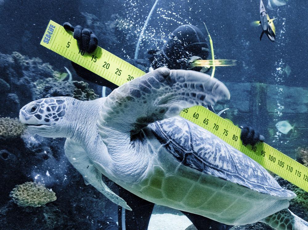 Annual inventory check at German SeaLife aquarium