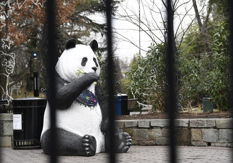 Americans outraged as National Zoo's panda cam goes dark amid gov't shutdown
