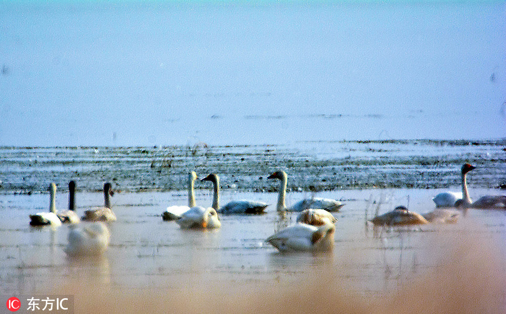 Jiangxi cracks down on illegal hunting