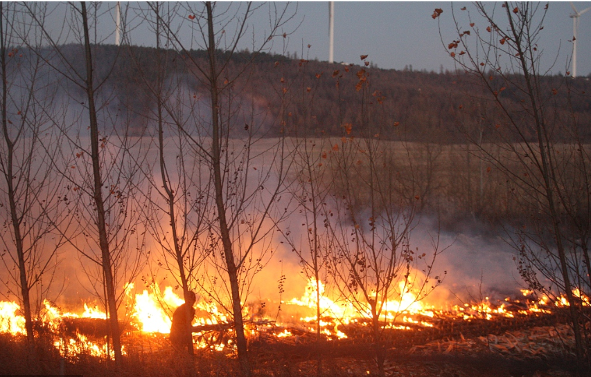 Officials in Harbin area punished over burning of stalks