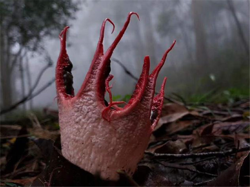 Fungus that looks like an alien creature spotted in Guizhou