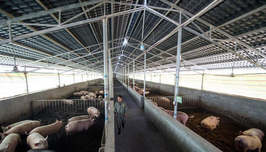 China reports new African swine fever case in Jiangsu