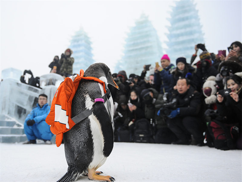 Penguins visit Ice and Snow World in Harbin