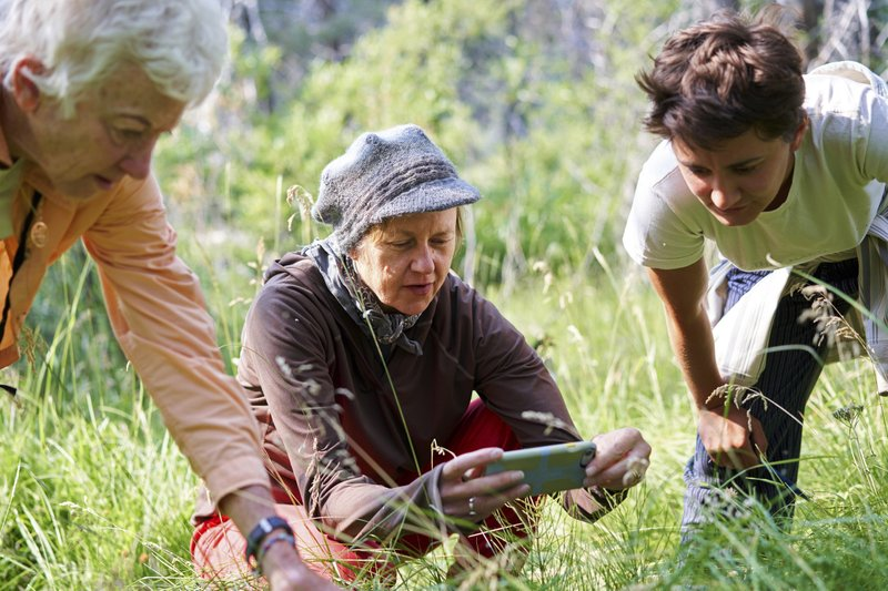 Apps let everyone help track health of insect populations