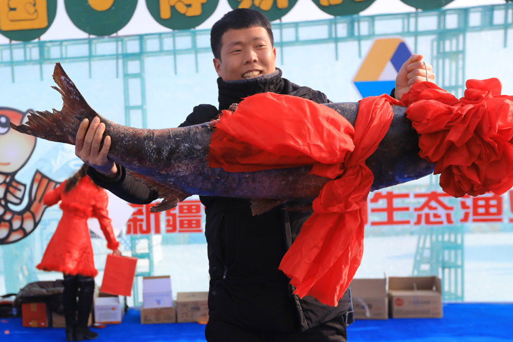 Biggest fish in first winter catch sells for 28,000 USD in Xinjiang