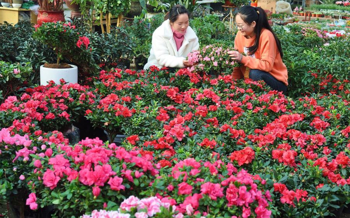 People busy preparing flowers for Spring Festival demands