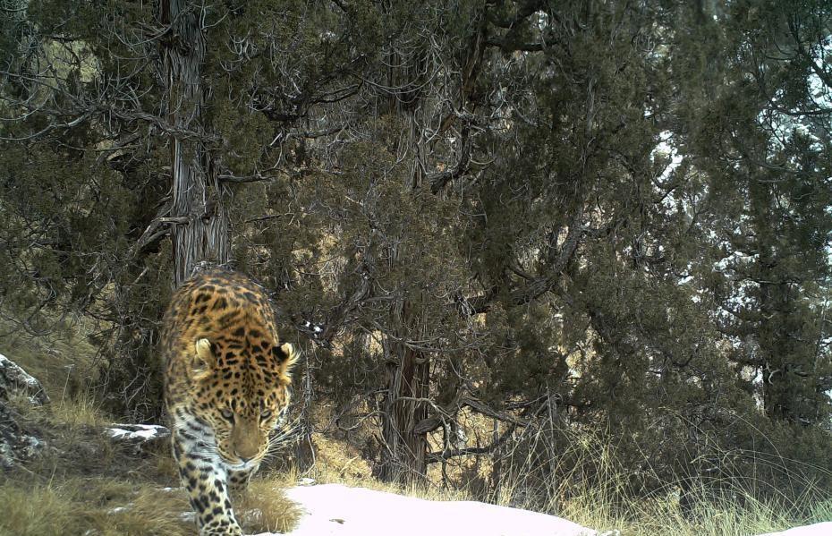 Rare wildlife captured on camera near Lancang River