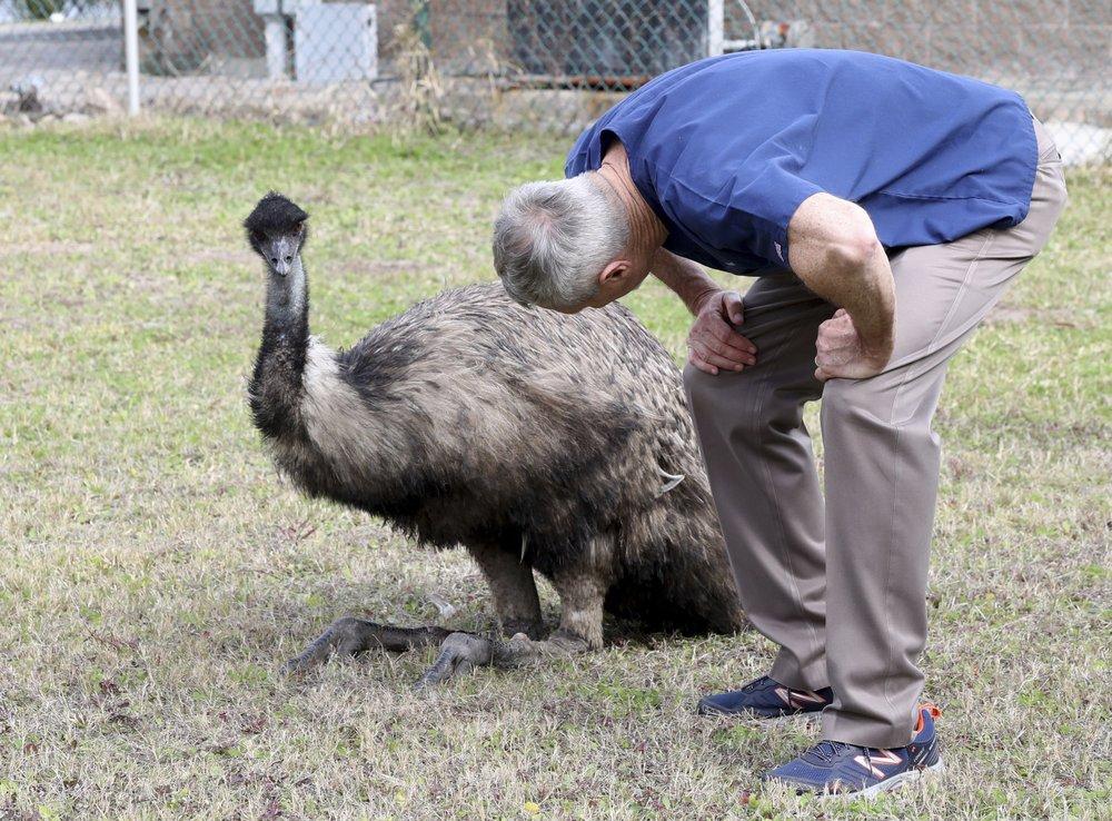 Police capture pair of runaway emus in coastal Texas