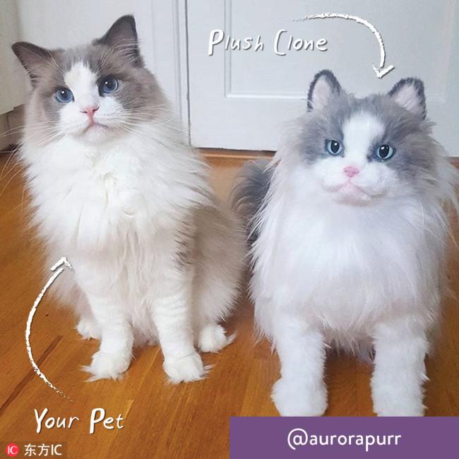 Clone pet.jpg