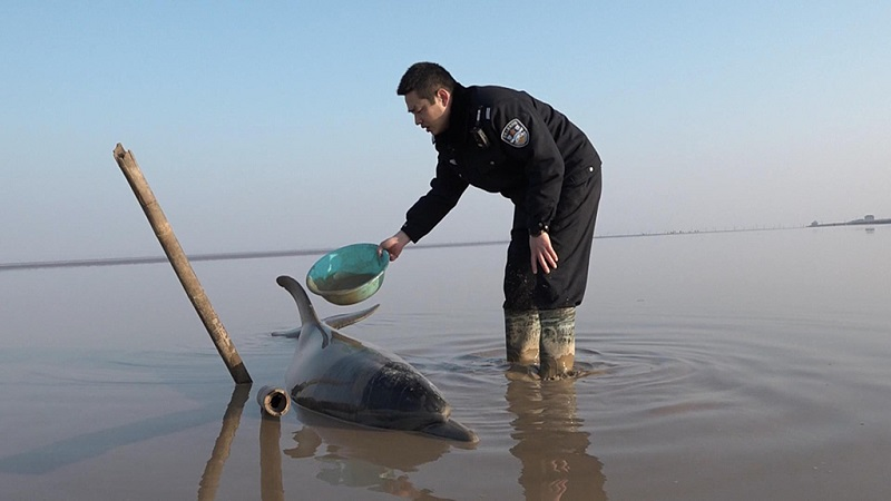 Jiangsu police rescue stranded dolphin
