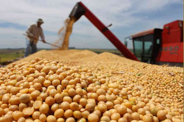 US weekly soybean futures end higher on US-China trade hopes