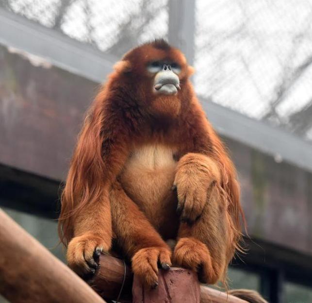 monkey.PNG