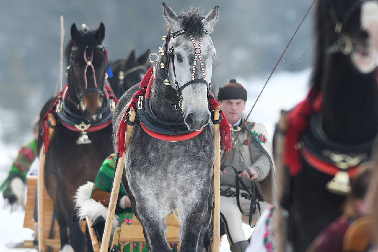 Poles comptete in traditional chariot race