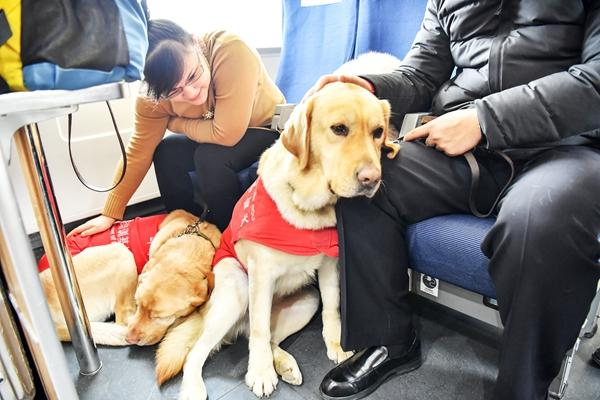 Guide dog helps visually impaired man navigate Spring Festival rush