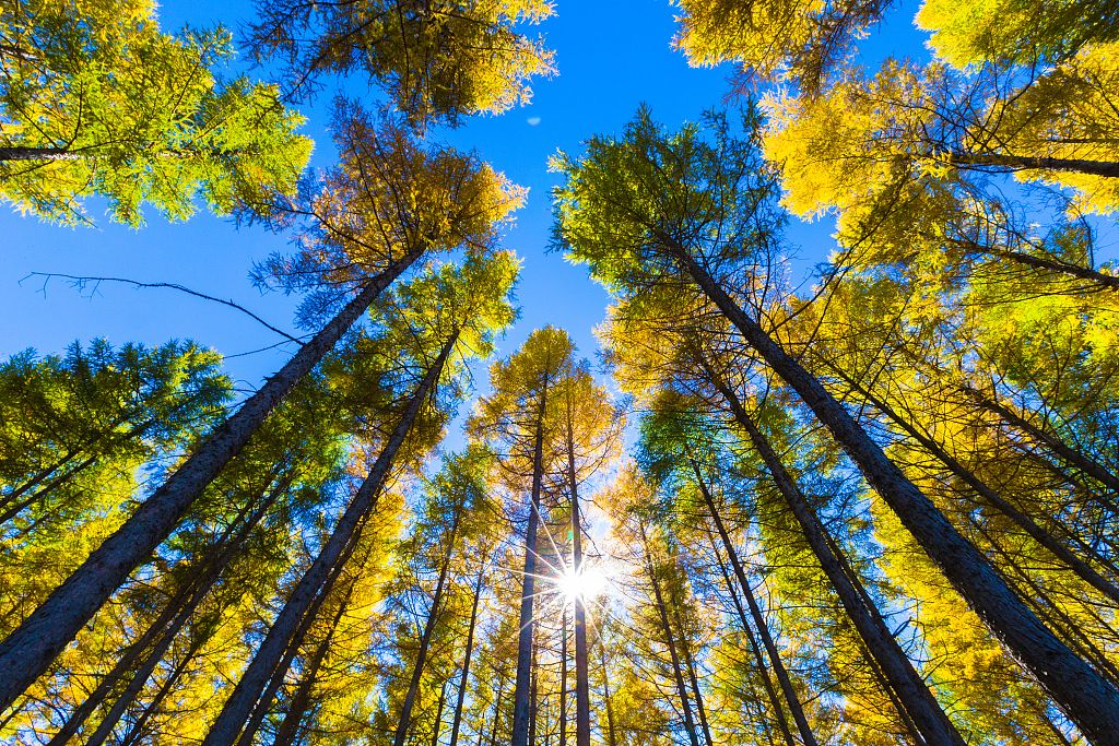 China's forest coverage jumps to 21.66% in 70 years
