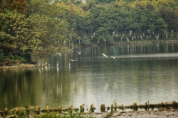 Guangdong to build 39 wetland parks in 2 years