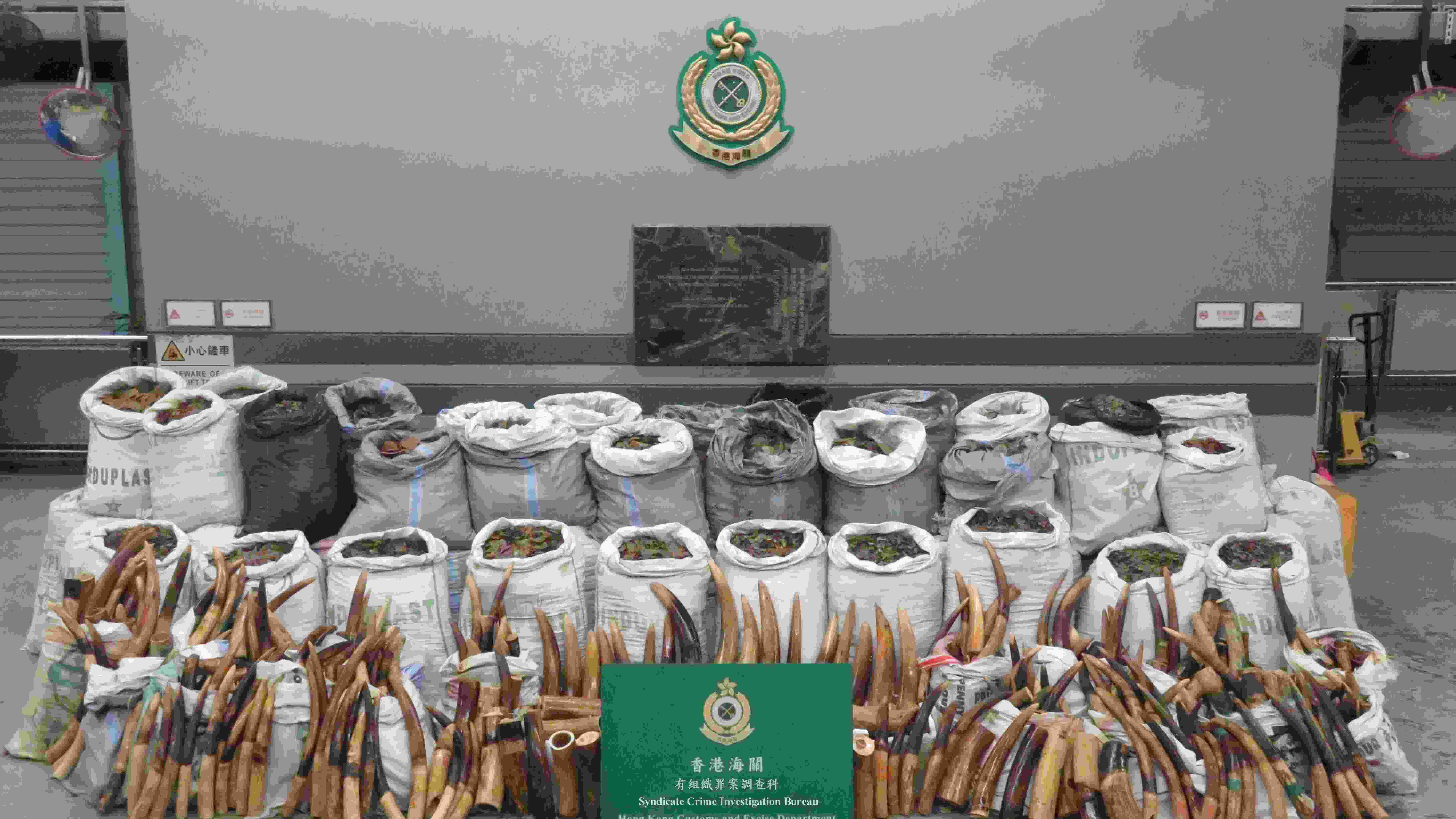 Record seizure of pangolin scales, ivory in Hong Kong