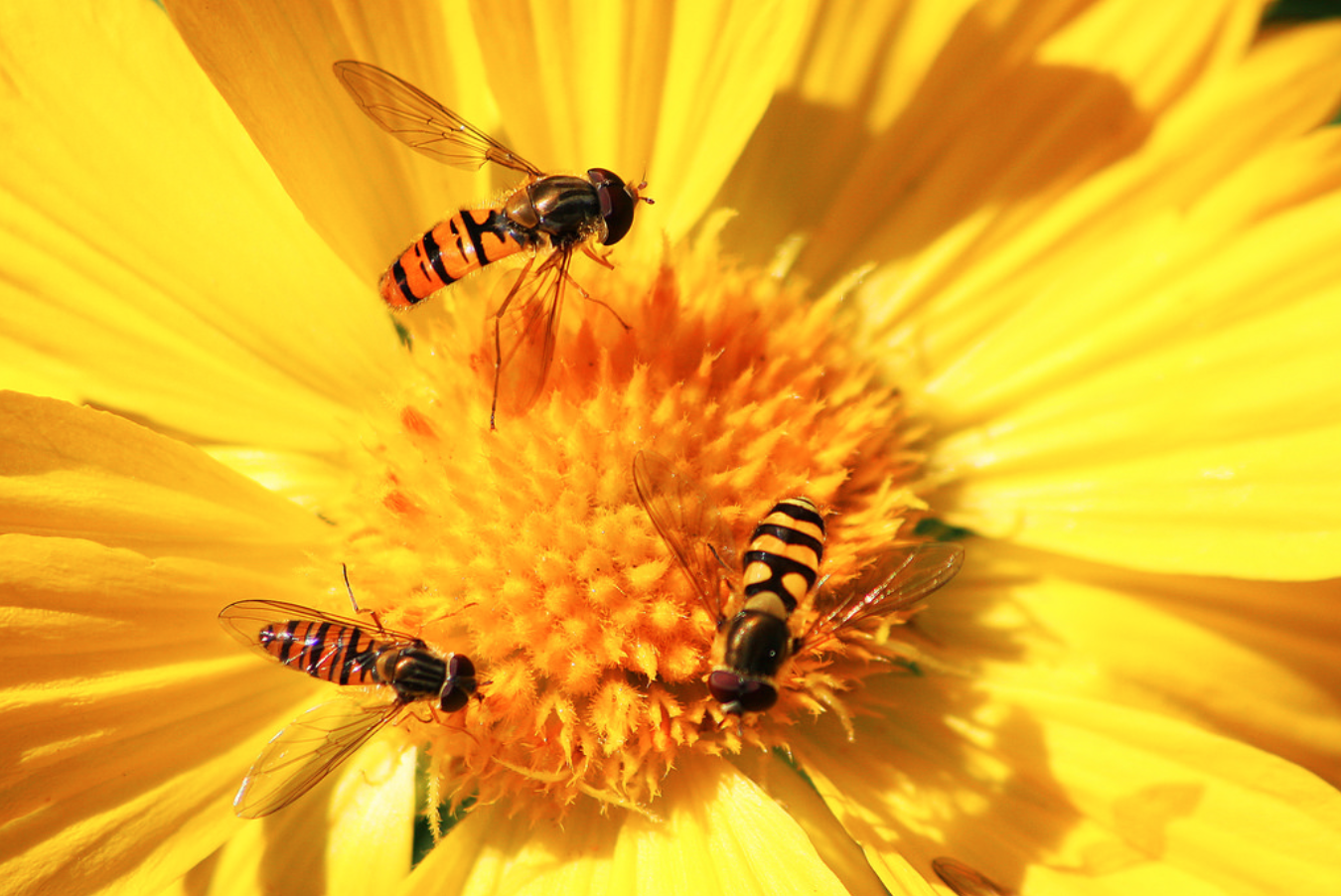 Bees can solve basic maths problems: study