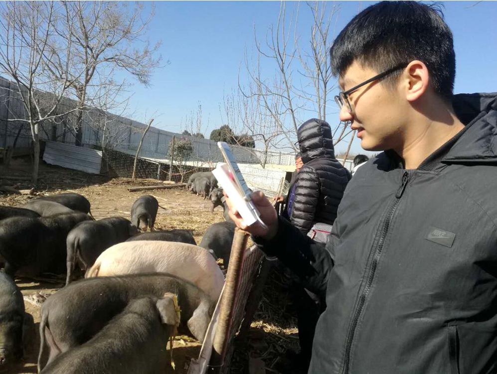 Internet, e-commerce boom facilitates black pork sales in Henan
