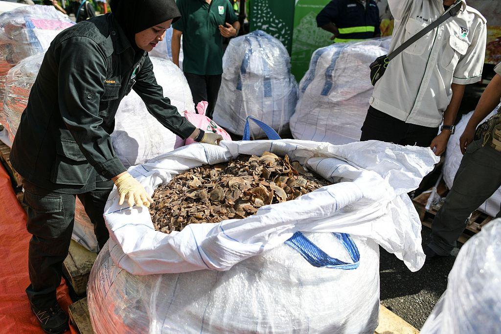 Malaysia makes record 30-tonne pangolin seizure