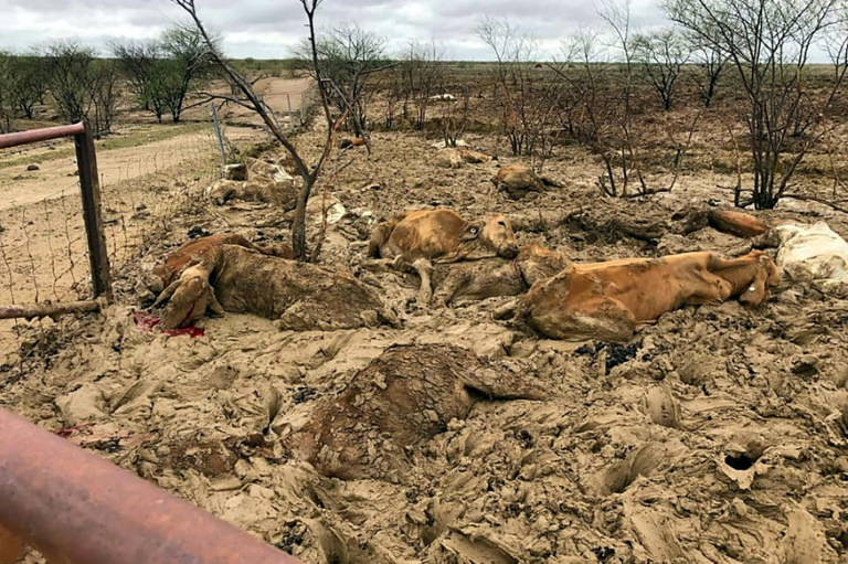 Australia cattle giant warns of 'extreme losses' from floods