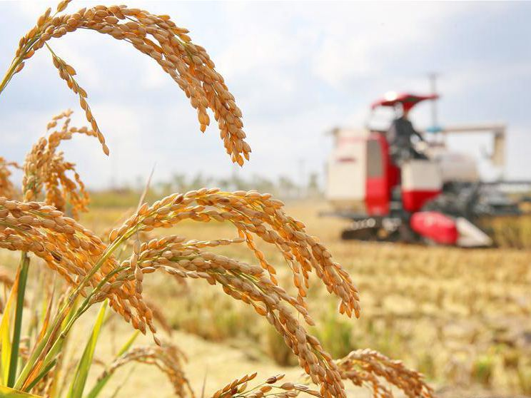 China plans further crop structure improvement