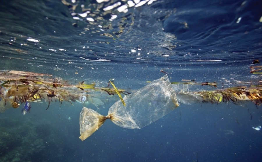 Microplastics found at Nordic sea bottom and in its living organisms: report