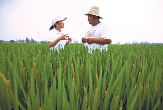 China to boost high-quality development of agriculture
