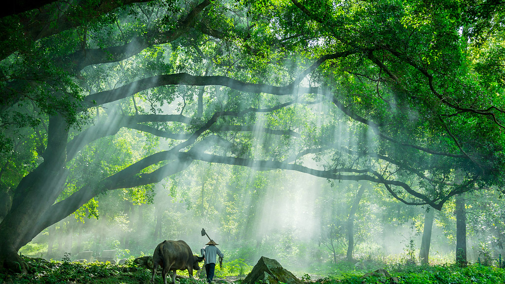 70 years of forest development: How does China make the world greener?