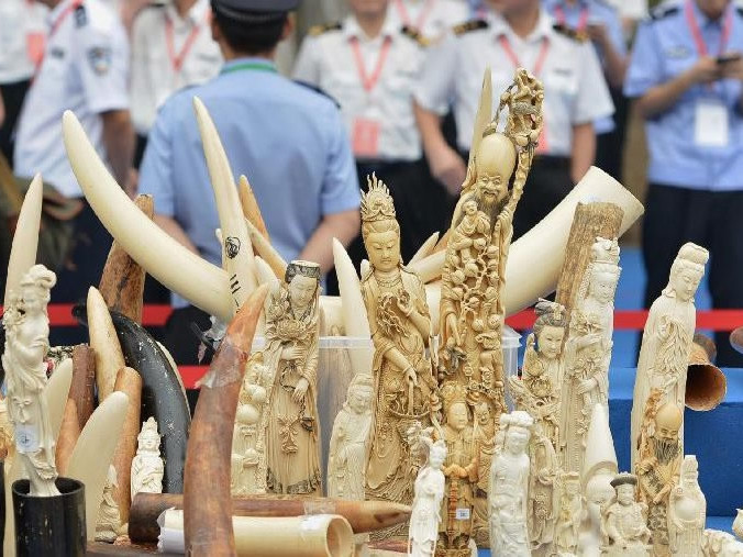 China's crackdown on illegal ivory trade praised as 'powerful blow'