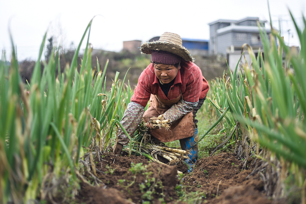 China unveils guidelines to support small household farmers