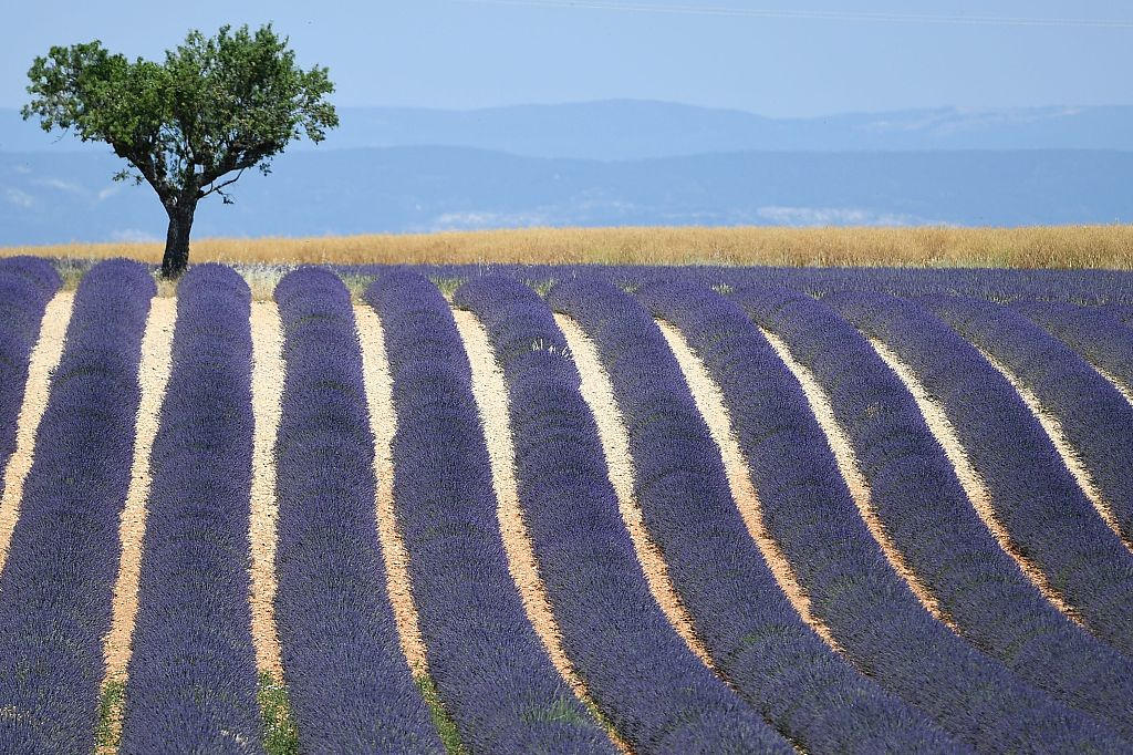 Disappearing biodiversity a challenge for food and agriculture