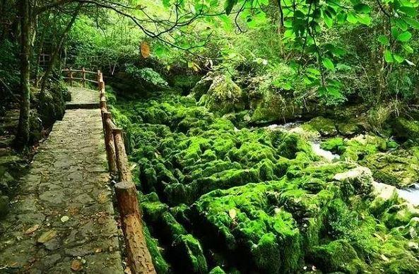 Stony deserts turning green in SW China