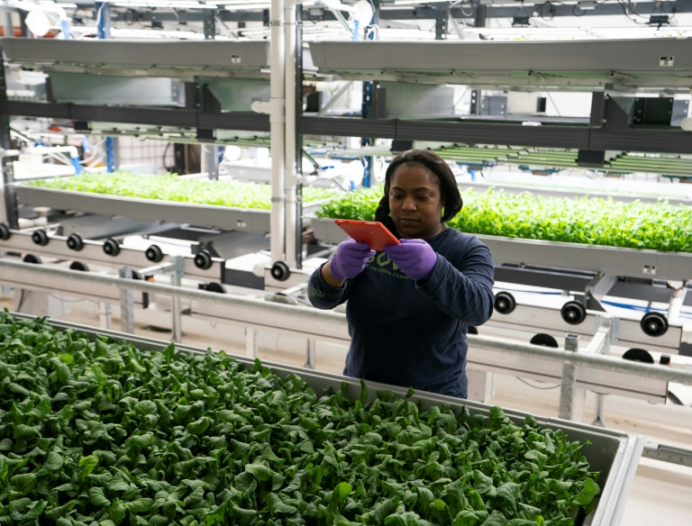 Tech connection boosts NY vertical farmers