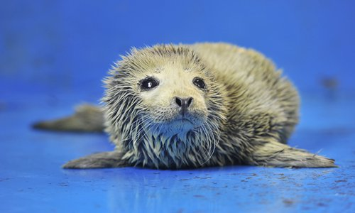 61 seal cubs rescued from poachers
