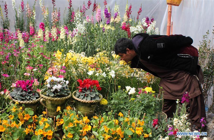 In pics: flower shop in south Afghanistan