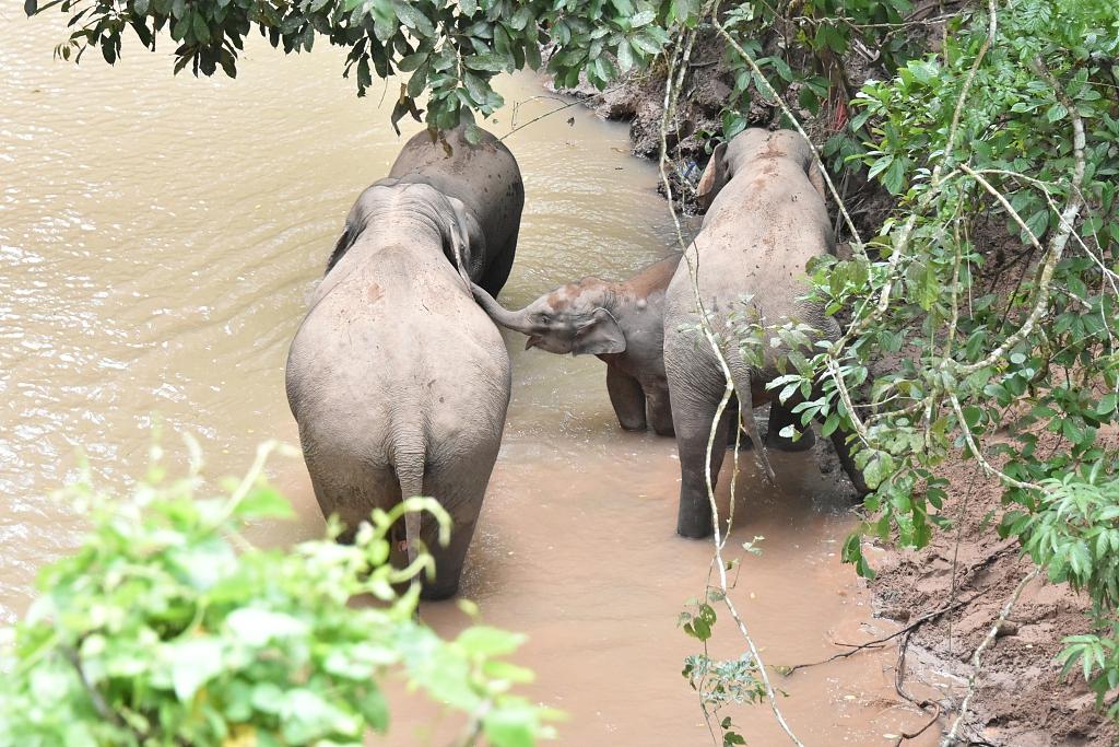 Wild elephant's 'hit and run' in Yunnan