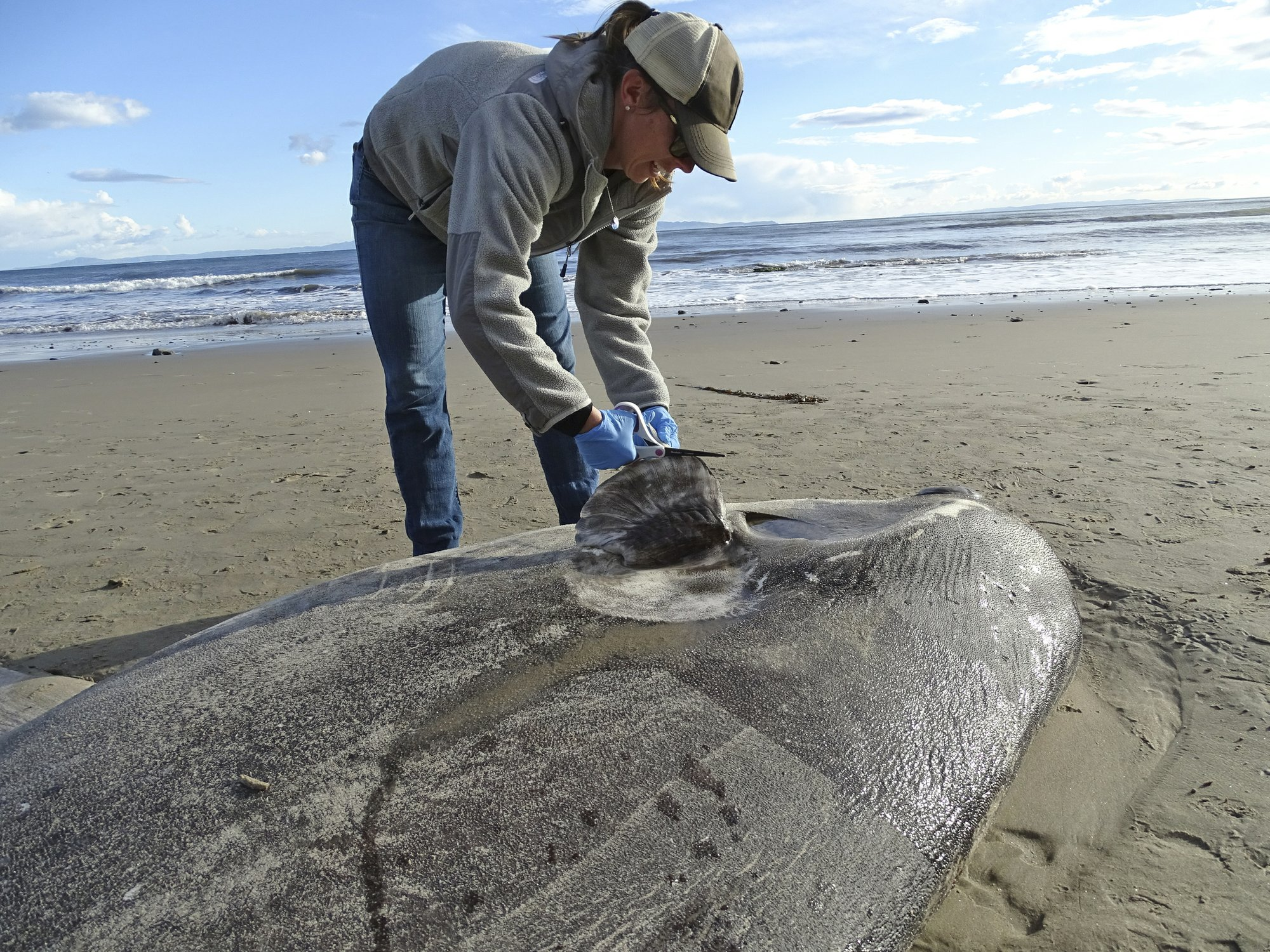 Rare sea creature washes ashore in Southern California