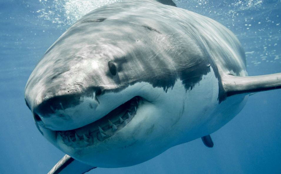 Study: More sharks bite people in Hawaii, but risk minuscule