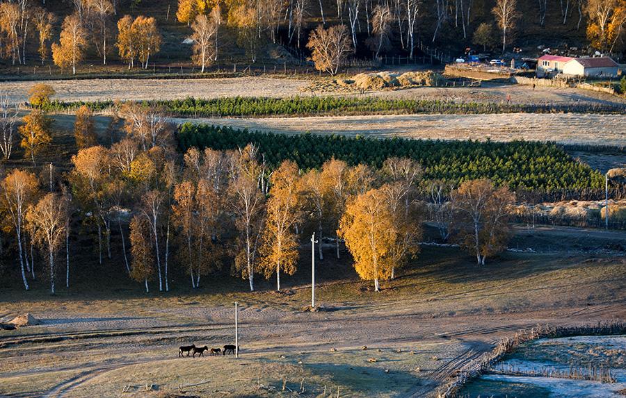 Inner Mongolia enhances grassland protection