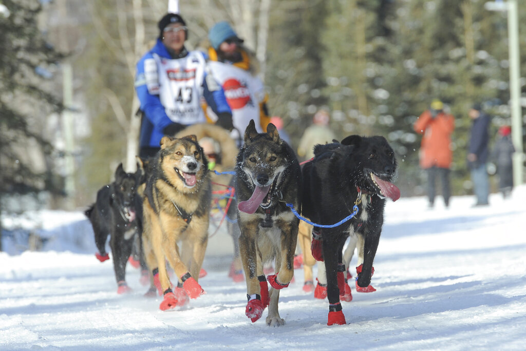 French musher takes lead in Iditarod race