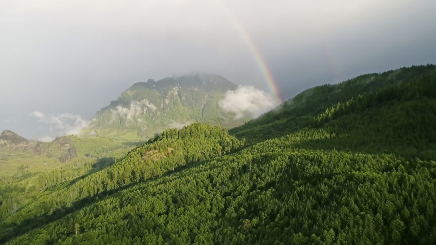 Video: China's Tree Planting Day has deep roots