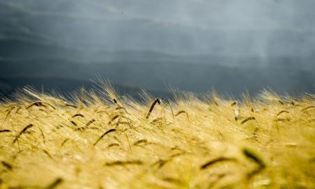 Chinese premier underlines stable grain production
