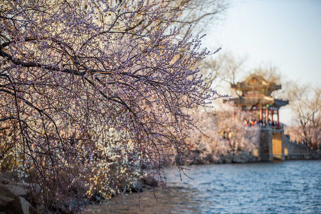 Scenery of peach blossoms and willows in Beijing's Summer Palace