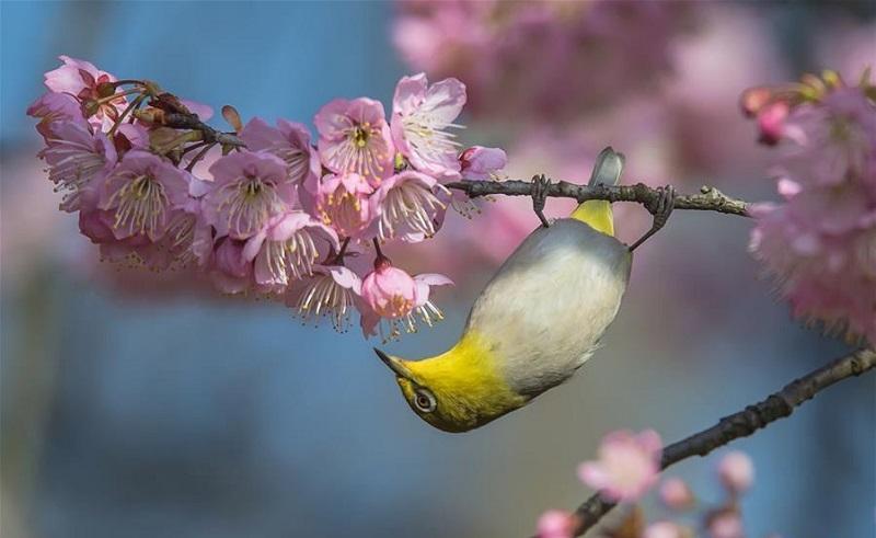 Birds seen on trees across China
