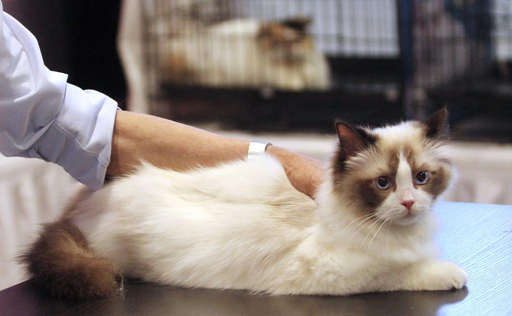 67 million cats spawn 'purrfect' economy