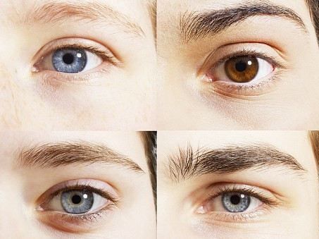 Researchers identify genes for eyebrow colors