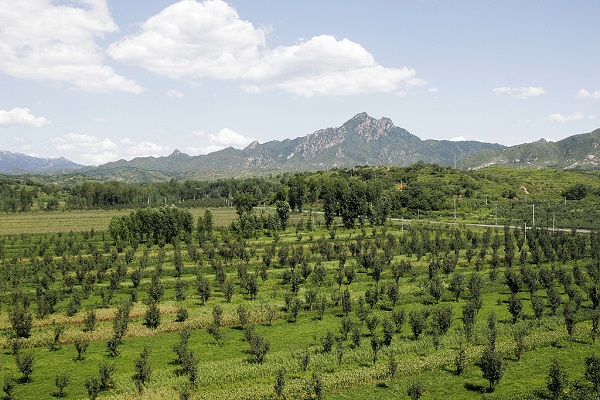 Beijing to afforest 16,667 hectares in 2019